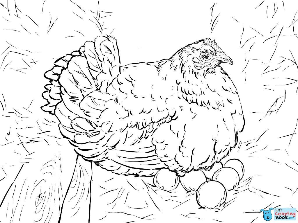 Hen Laying Eggs Coloring Page Free Printable Coloring Pages Intended For Hen On Nest Coloring Page Chicken Coloring Chicken Coloring Pages Bird Coloring Pages