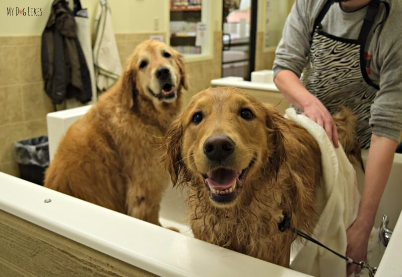 How to Bathe a Dog A Step by Step Guide Dog grooming