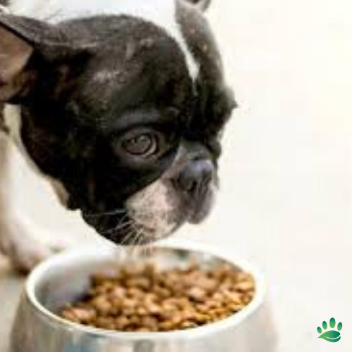 Does Your Pet Have Skin And Coat Problems Stomach Problems Or Even Just Finicky About Their Food Well Then Its A Great Ti In 2020 Dogs Food Animals Dog Food Recipes