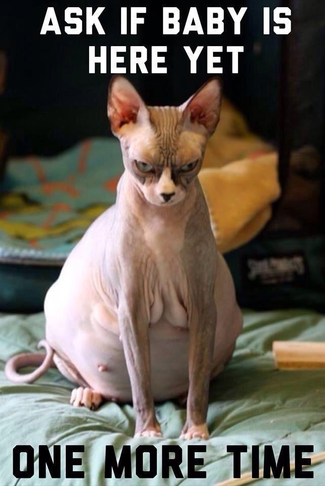 Single mann meme cat [PUNIQRANDLINE-(au-dating-names.txt) 68