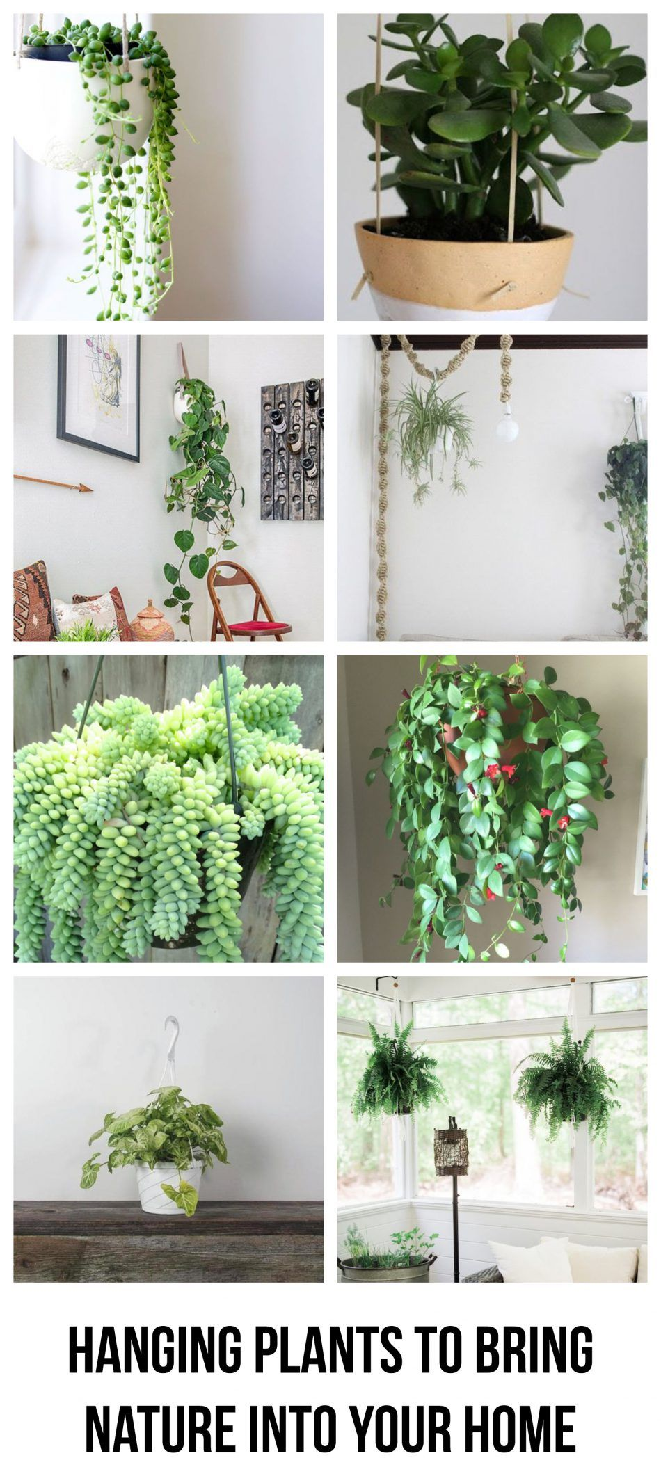 Hanging plants to bring nature into your home #patioplants