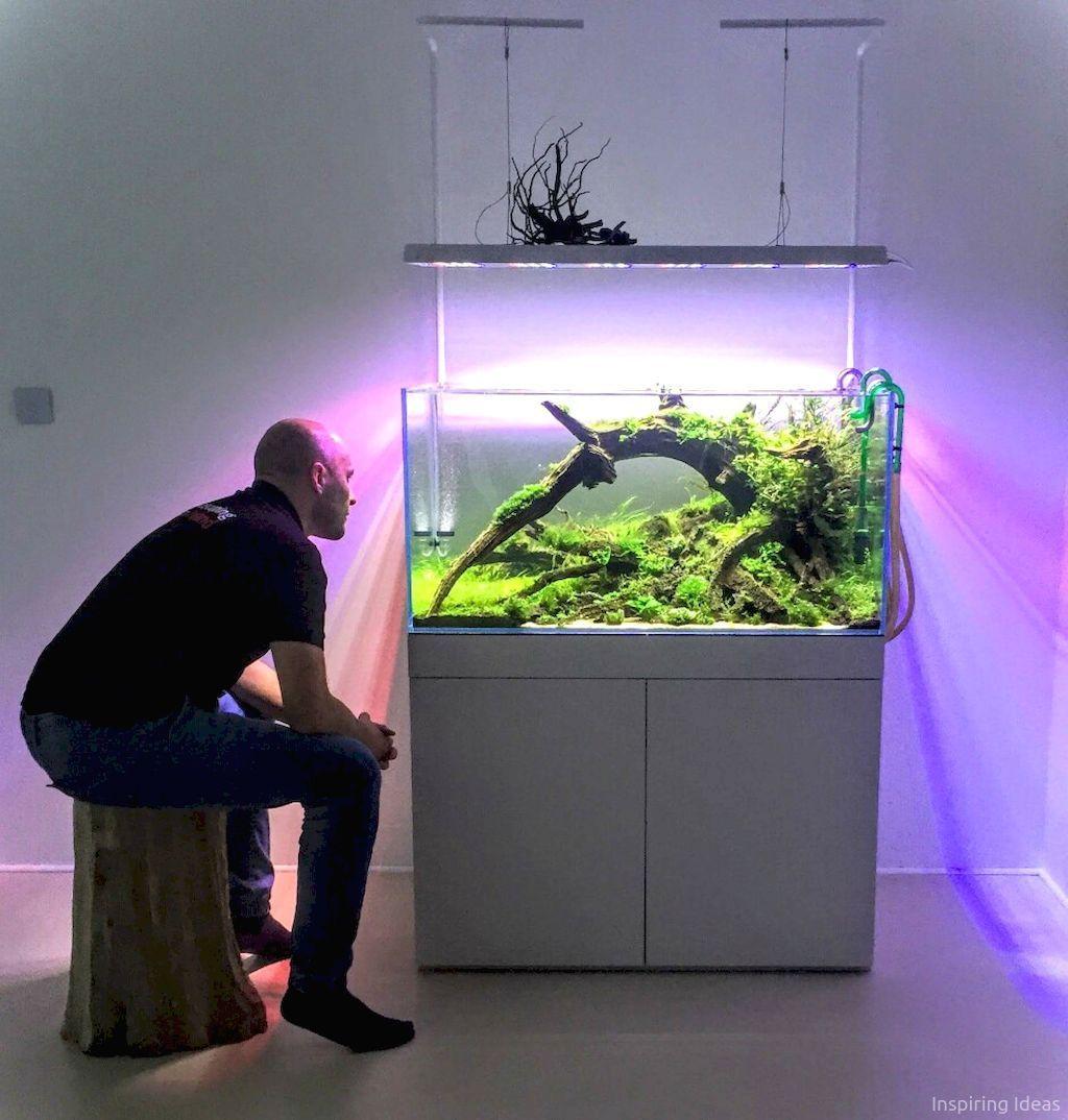 43 Aquascaping Ideas For Inspirations