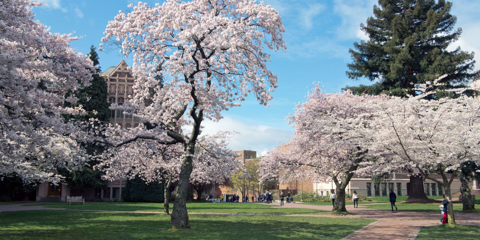The 15 Best Places In The Us To See Cherry Blossoms This Spring Cherry Blossom Blossom University Of Washington