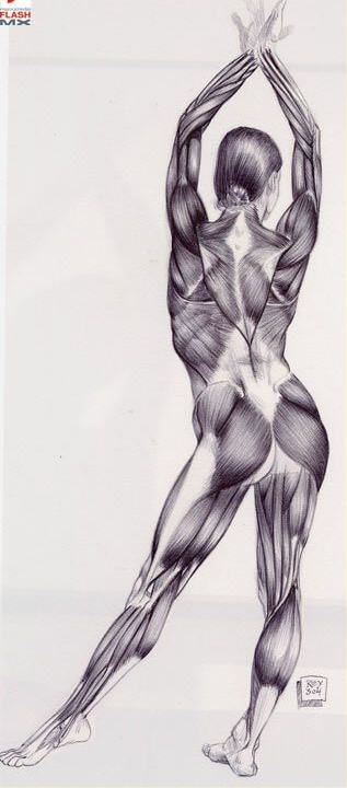 Anatomy helps us in yoga, to understand the body.   Anatomy ...