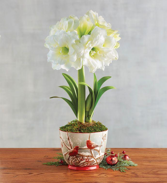 White Ruffle Amaryllis Single Arranjos De Flores Artificiais