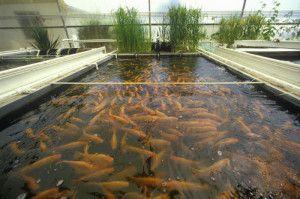 sample business plan for fish market