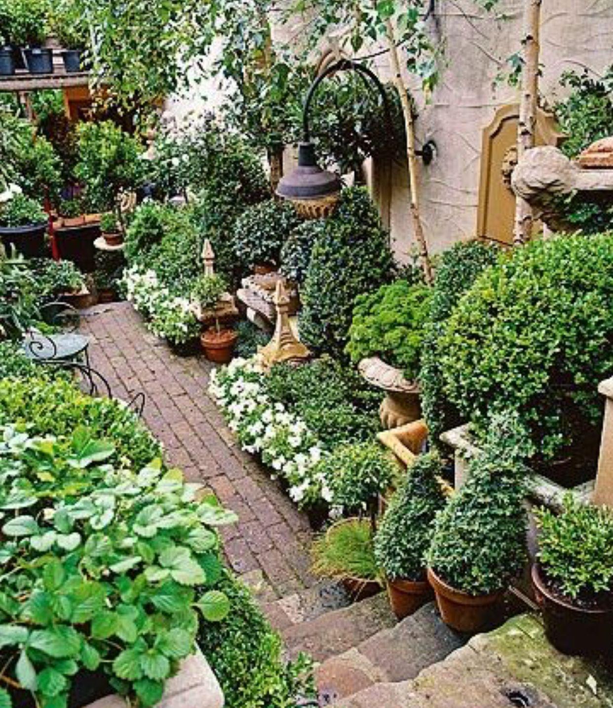 Decoration Allee De Jardin belle composition de plantes vertes au bord d'un jolie allée