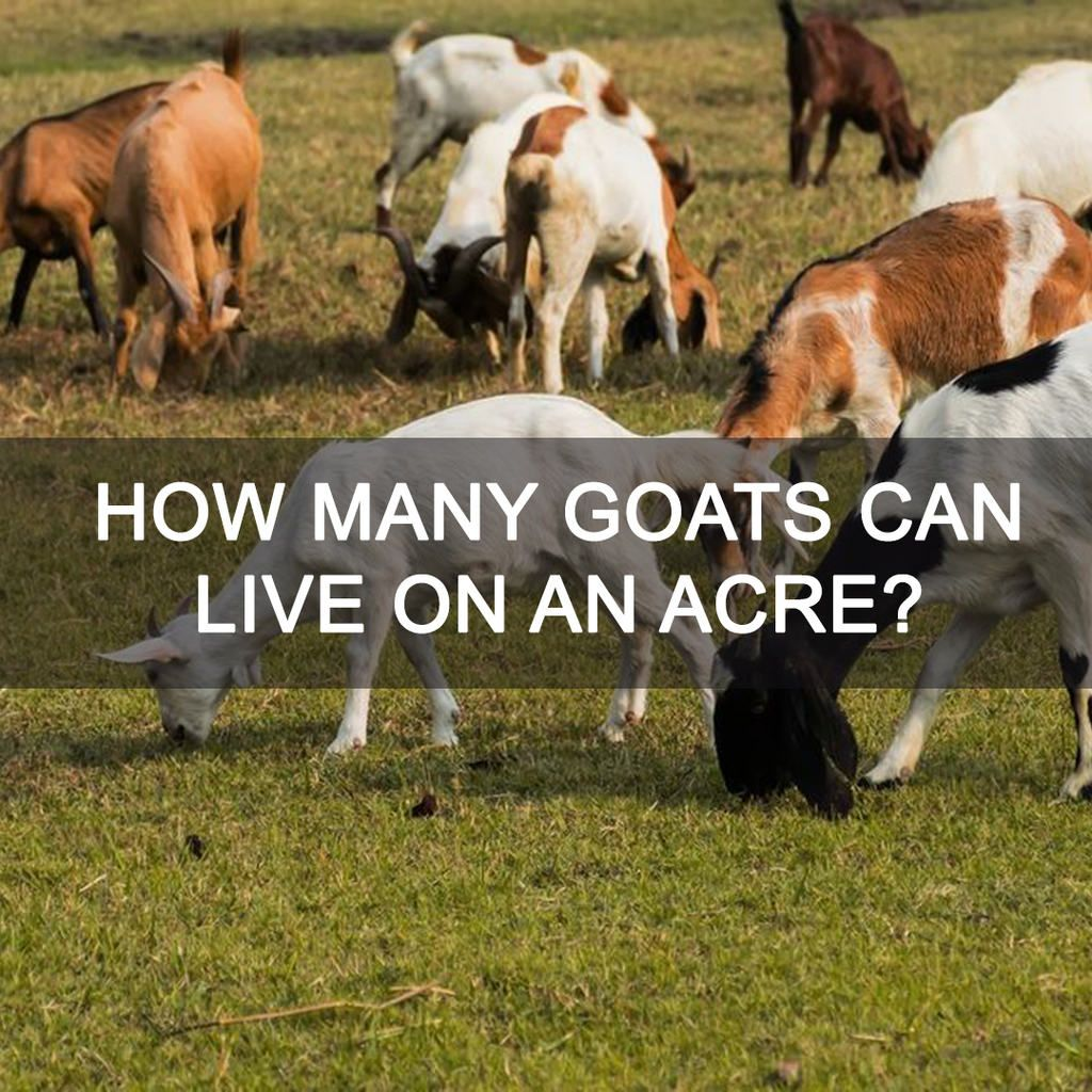 how many goats can live on an acre?