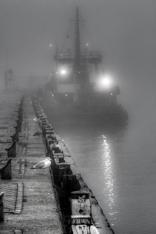 """Grey """" Misty by Tom Heijnen """""""