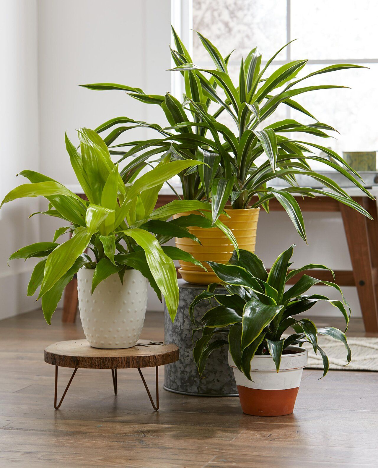 23 Of The Easiest Houseplants You Can Grow In 2020 With 400 x 300