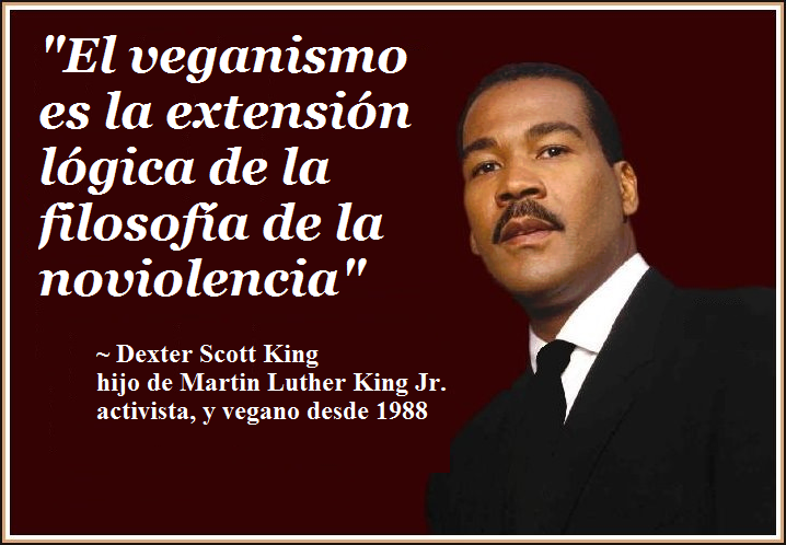Frases Veganas Frases Veganas Frases Vegetarianas Y