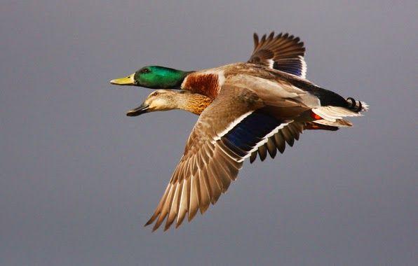 Fotografías lindas de aves coloridas   Fotos Bonitas de Amor   Imágenes Bonitas de Amor