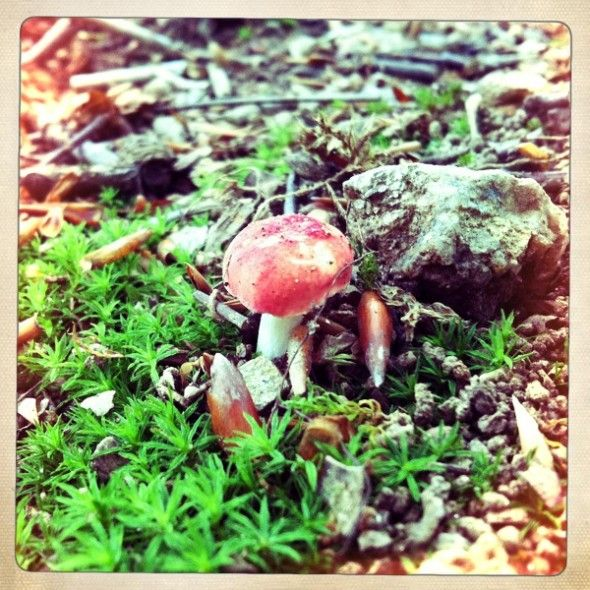 magica mushrooms via indie fixx