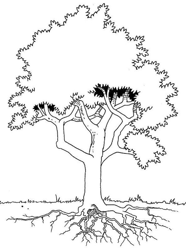 Tree Roots Jpg 600 800 Tree Coloring Page Coloring Pages Roots Drawing