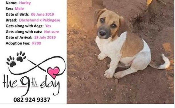 The 9th Day Krugersdorp Gauteng Did We Mean Jack Russell Nope