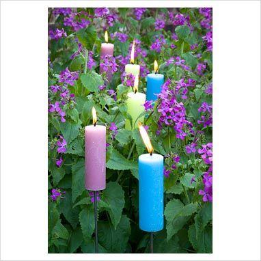Candles in the honesty ( lunaria annua) Perch Hill