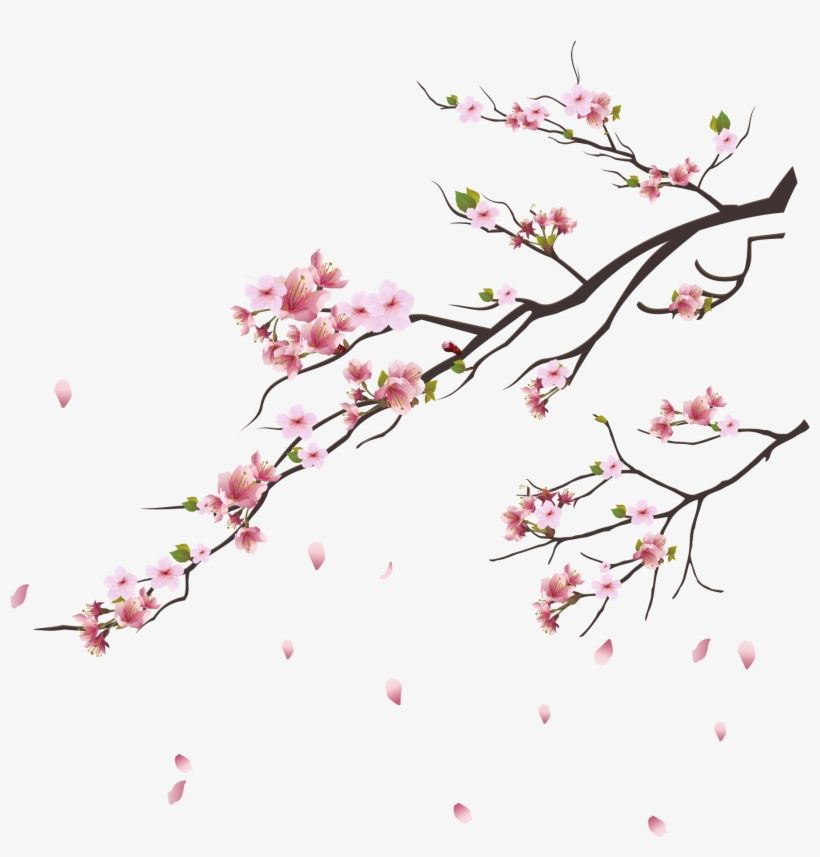 Blossom Trees Cherry Blossom Tree Pink Flowers Botanical Cherry Blossom Branch Png Tran Cherry Blossom Art Cherry Blossom Branch Cherry Blossom Painting