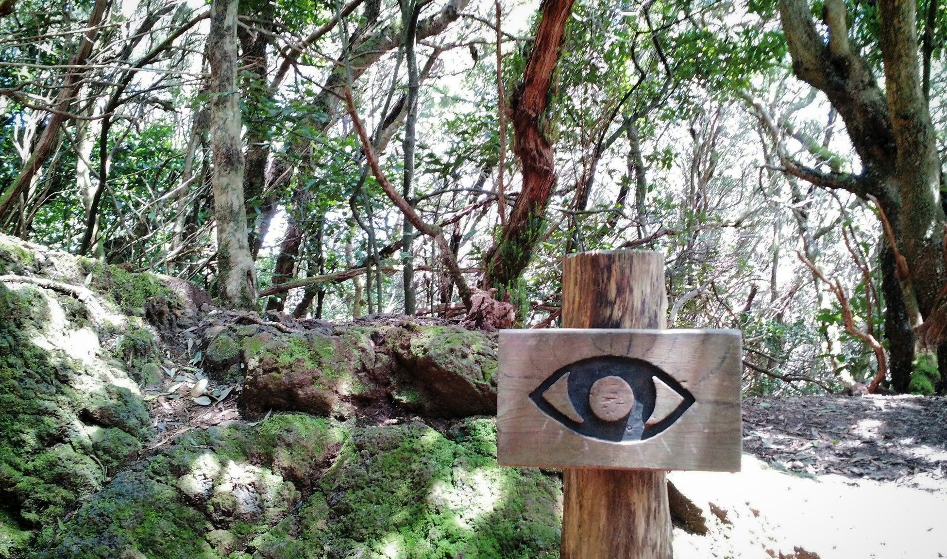 Sendero de los Sentidos, Anaga, Tenerife  #canarias #tenerife #wood #laurisilva #senderismo