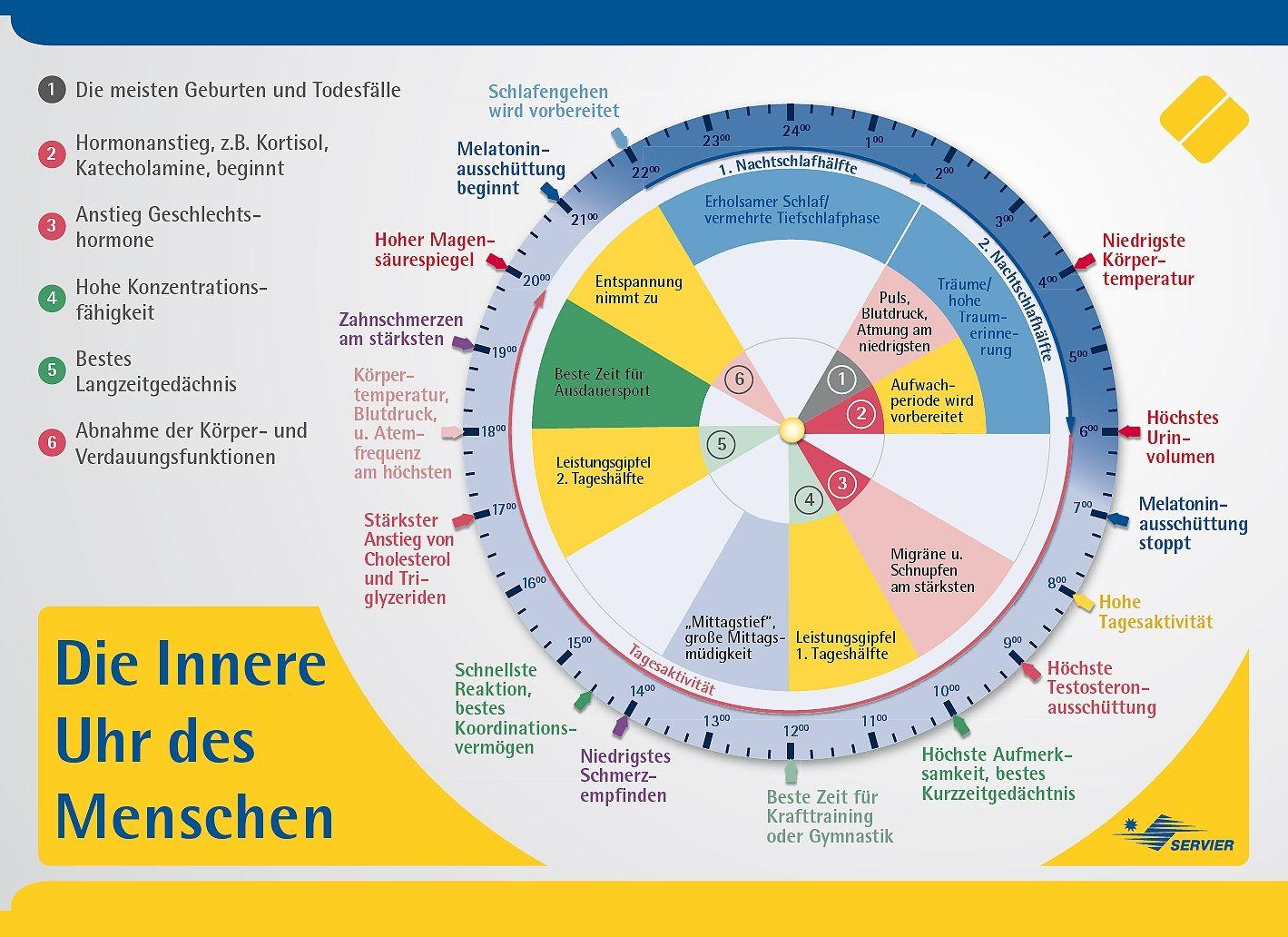 Ernahrung Beeinflusst Unsere Innere Uhr Organuhr Gesundheit
