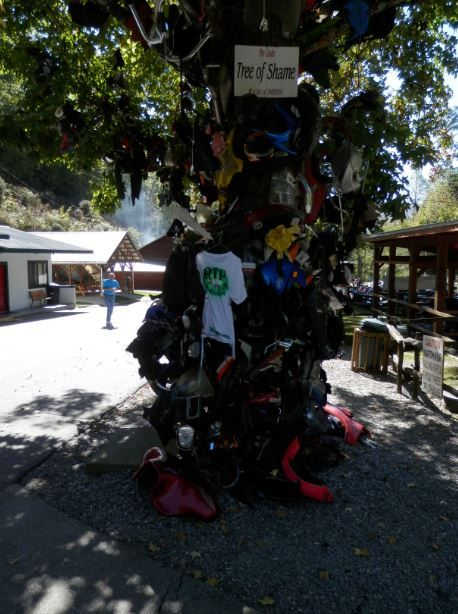 Tail Of The Dragon Tree Shame At Deals Gap Nc Motorcycle Resort October 2017