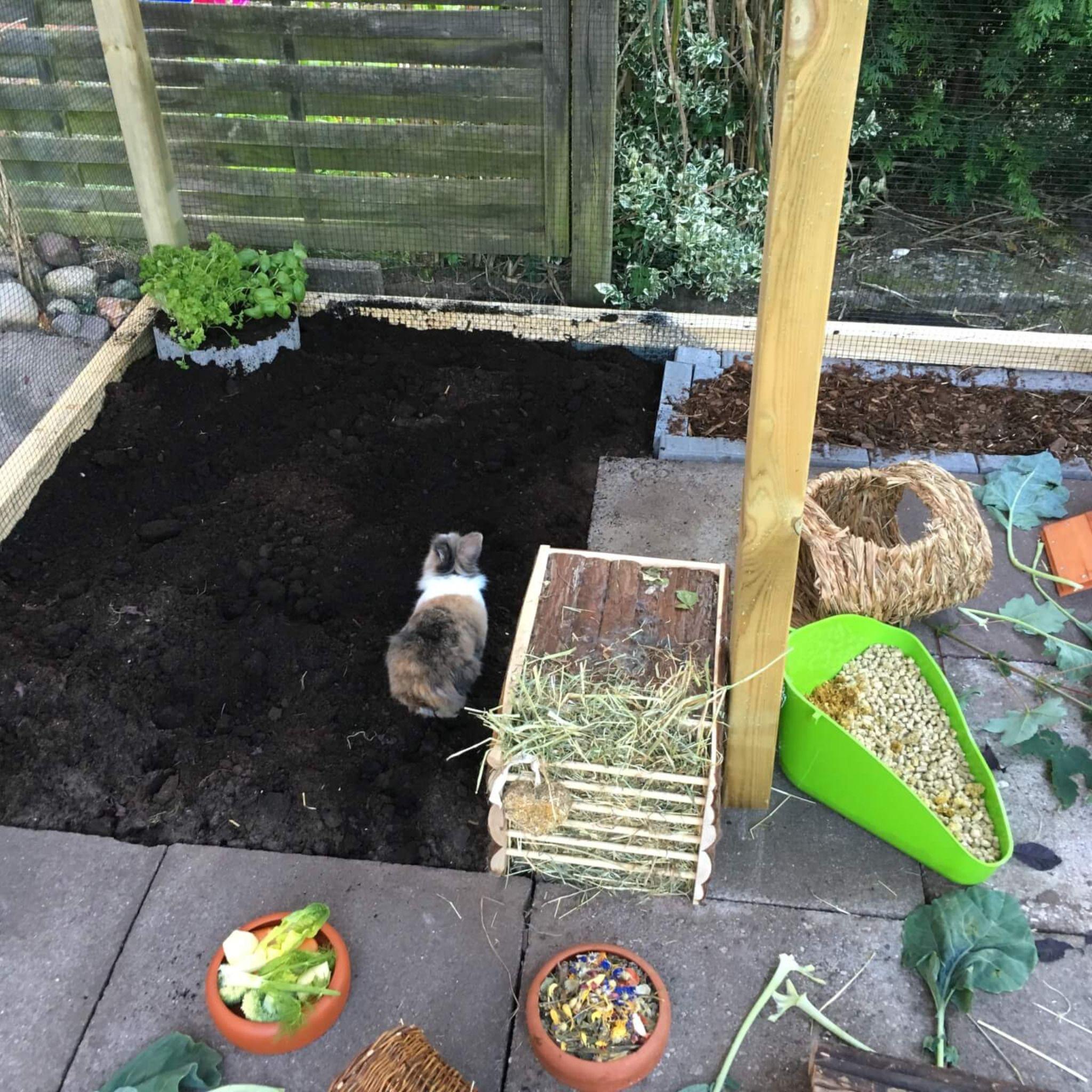 Mein Kaninchen Aussengehege Eigenbau Kaninchen Aussengehege Kaninchen Aussengehege