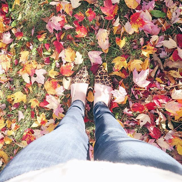 All the leaves are falling 🎶