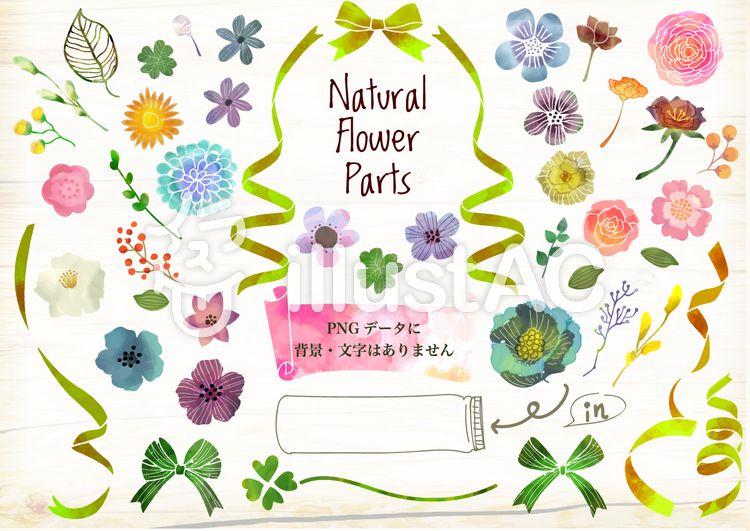 フリー素材てがきの植物 おしゃれな花の水彩イラスト おしゃれ