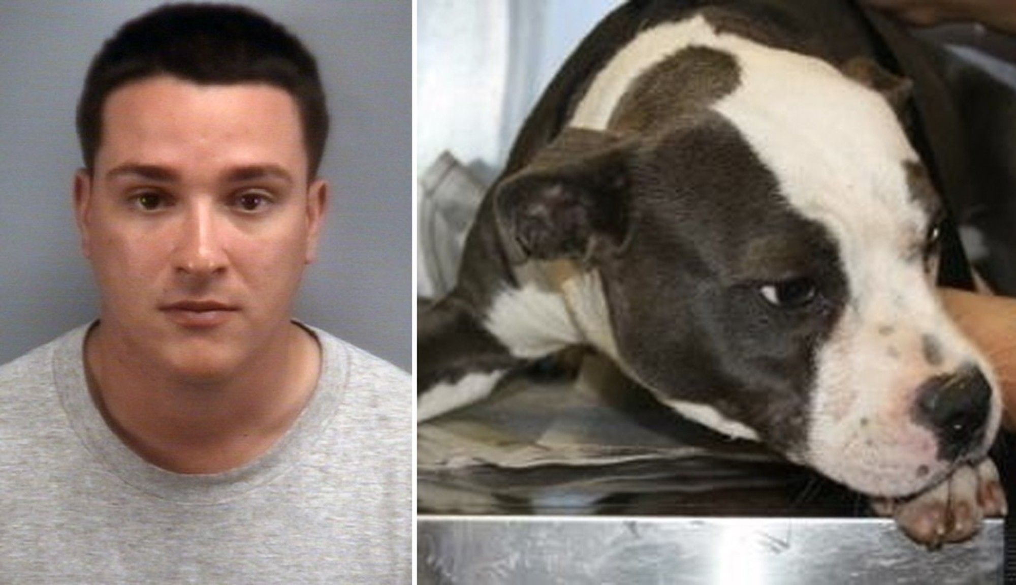 Man Admits To Adopting Dog Off Craigslist Burning Her Alive Dog Adoption Animals Dogs
