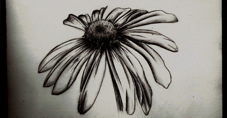 Wilted Daisy Pencil Sketch By Tallis On Deviantart Daisy Tattoo Designs Daisy Tattoo Tattoo Sleeve Designs