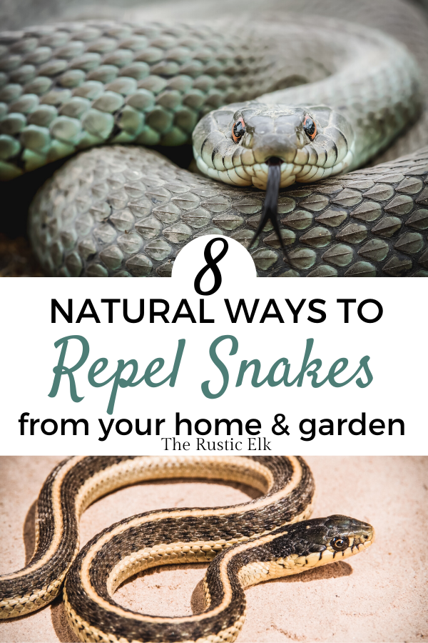 How To Naturally Repel Snakes In 2020 With Images Snake Snake Repellant Plants Bee Friendly Garden