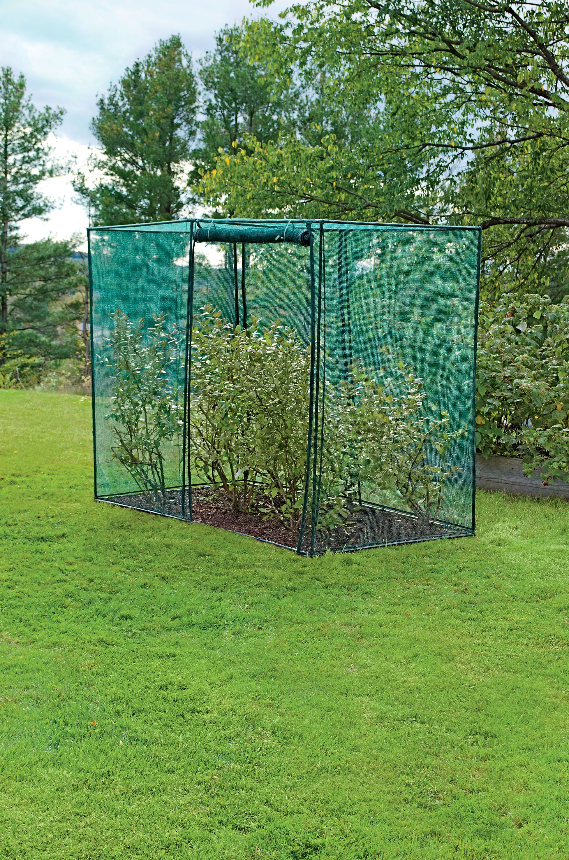Crop Cage, 4' x 8' x 6' Tall | Blueberry Bush Covers ...