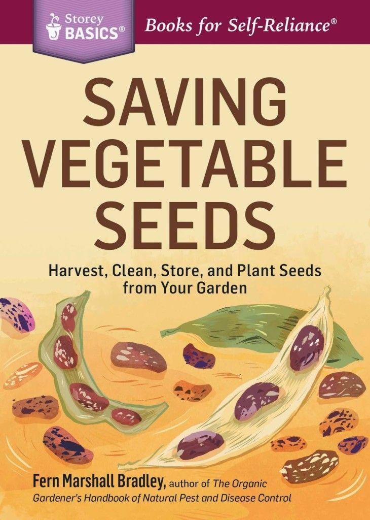 How to clean and save tomato seeds storey publishing in