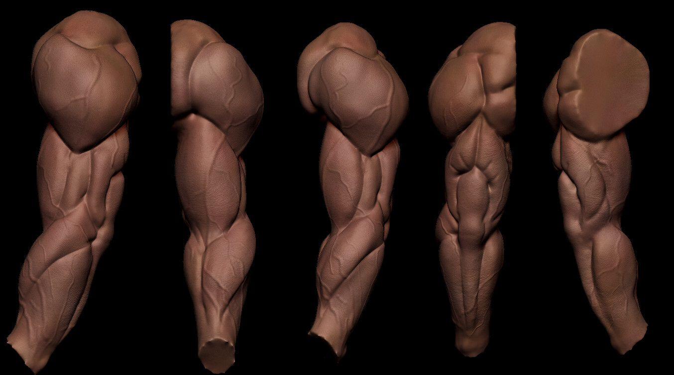 charles campello | Hulk | Pinterest | Anatomy, ZBrush and Human anatomy