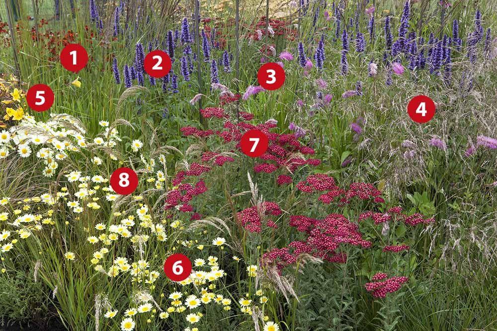 Ongebruikt Natuurlijke border in rood, geel en violet | Prairie tuin, Engelse DD-21