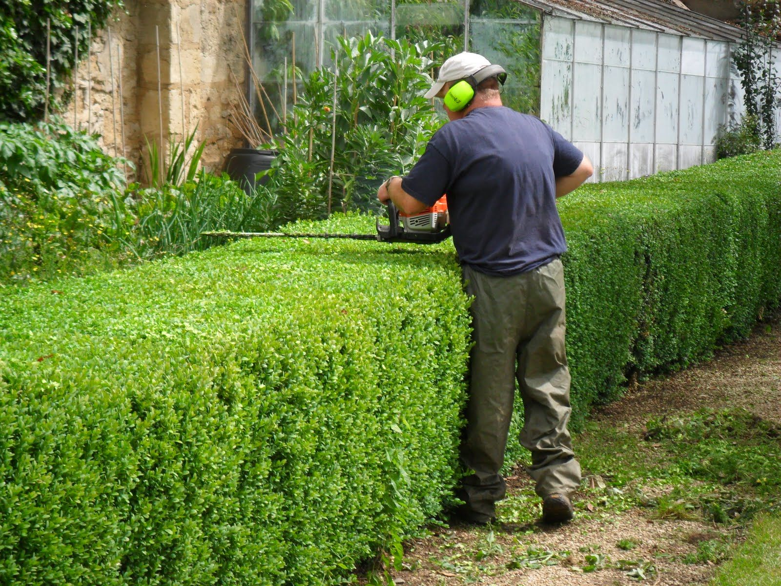 Uncategorized Hedge Trim hedge cutting perfect gardening pinterest cutting
