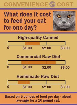 Dry Cat Food The Big Easy Dry Cat Food Cat Nutrition Healthy Cat Food