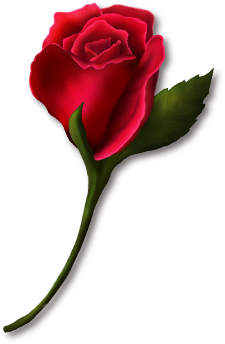 Red Rose Bud Clipart Com Free Clipart Pictures Roses Png Red Rose Bud Png Clipart Beautiful Flower Drawings Red Roses Rose Clipart