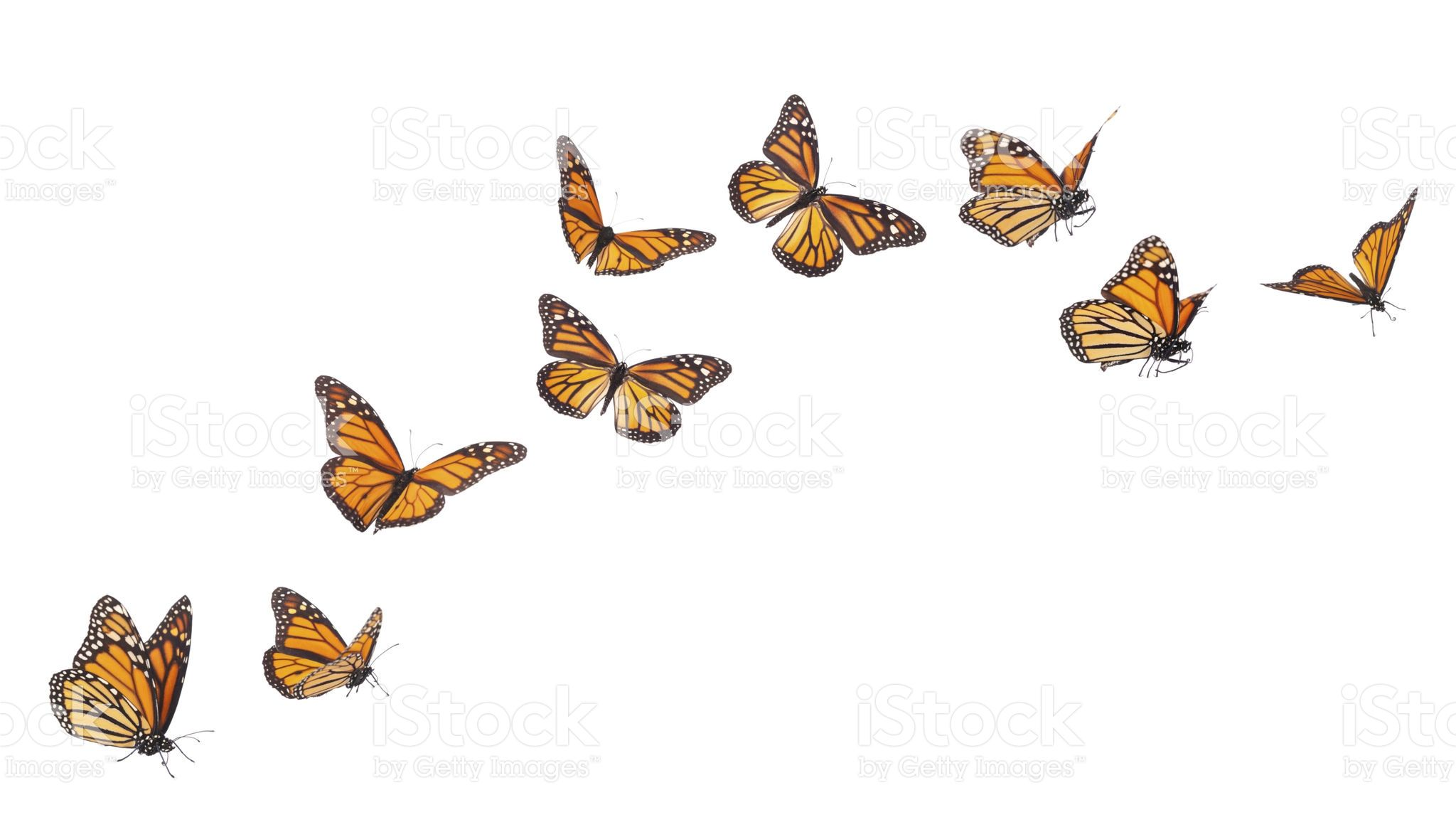 Monarch Butterflies In Various Flying Basking And Standing Diy Art Painting Fly Drawing Butterfly Painting