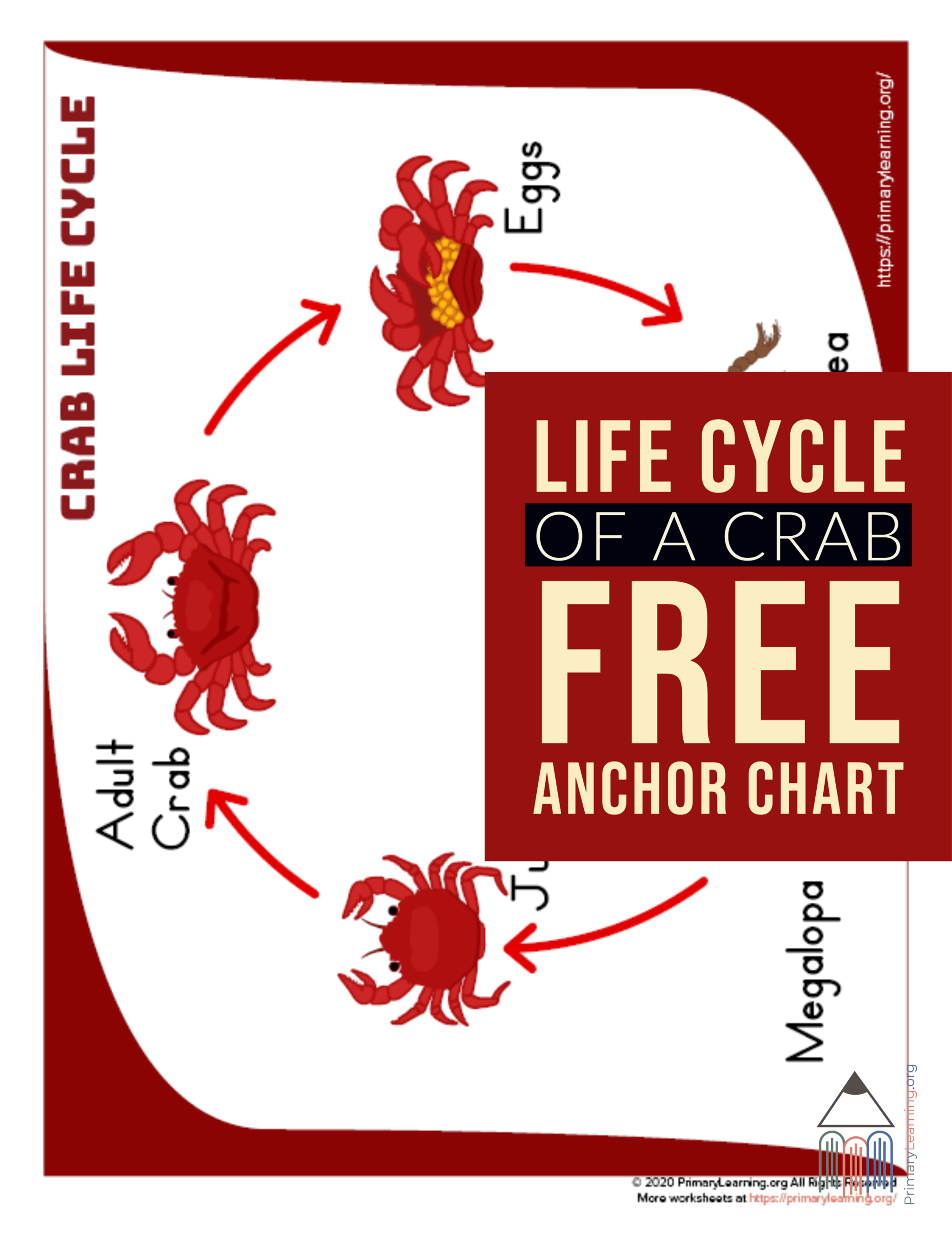 Crab Life Cycle Anchor Chart In