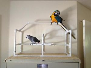Table Top Bird Stand
