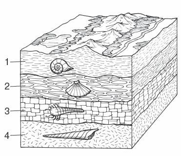 1000 images about project inspiration fossil on pinterest  : rock layers diagram - findchart.co