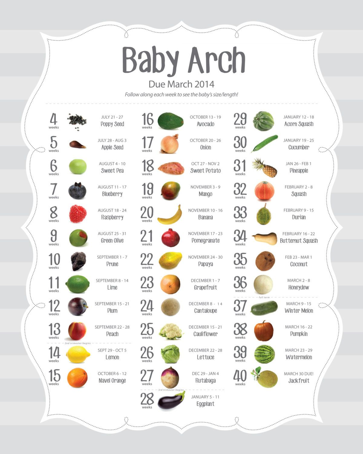 Size of baby each week being a mom pinterest pregnancy babies size of baby each week geenschuldenfo Choice Image