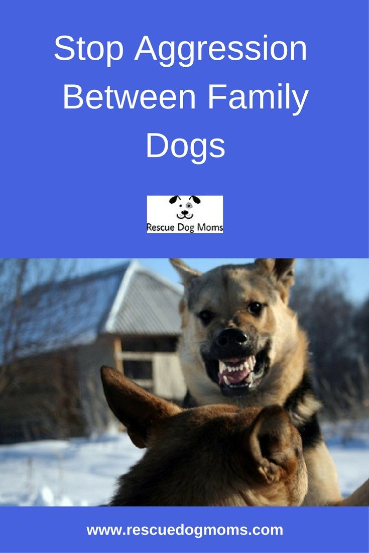 10 Ways To Stop Aggressive Behavior Between Family Dogs Family Dogs Dogs Rescue Dogs