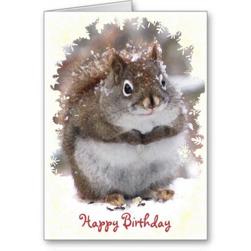 Sweet Squirrel Birthday Card Squirrel And Animal