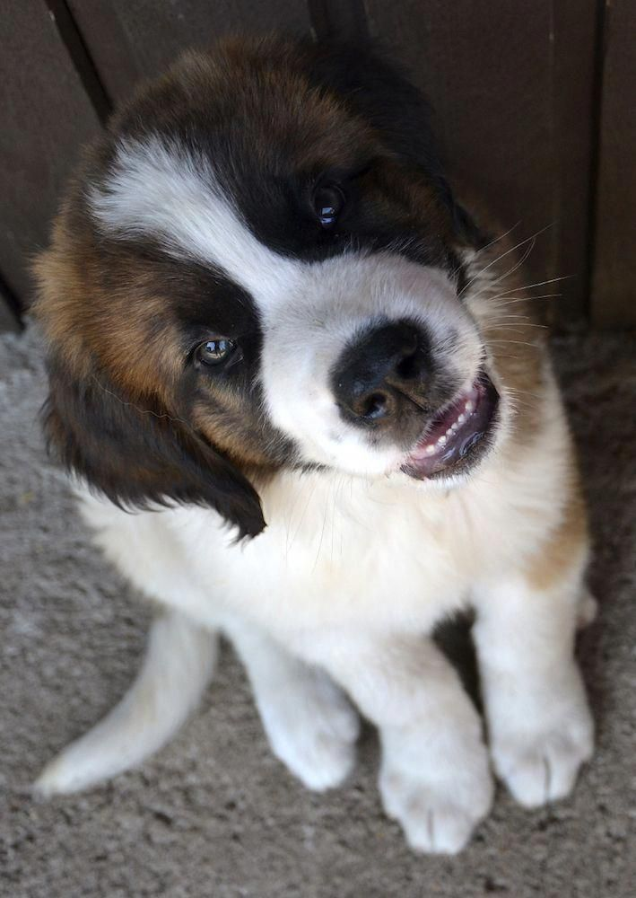 Pet Dogs Breeds Dogs Training Obedience Dogs Ideas For The Home Dogsideascreati Breeds Breedsdogs Dogs Dogsideas In 2020 Pets Dogs Breeds Happy Dogs Pet Dogs