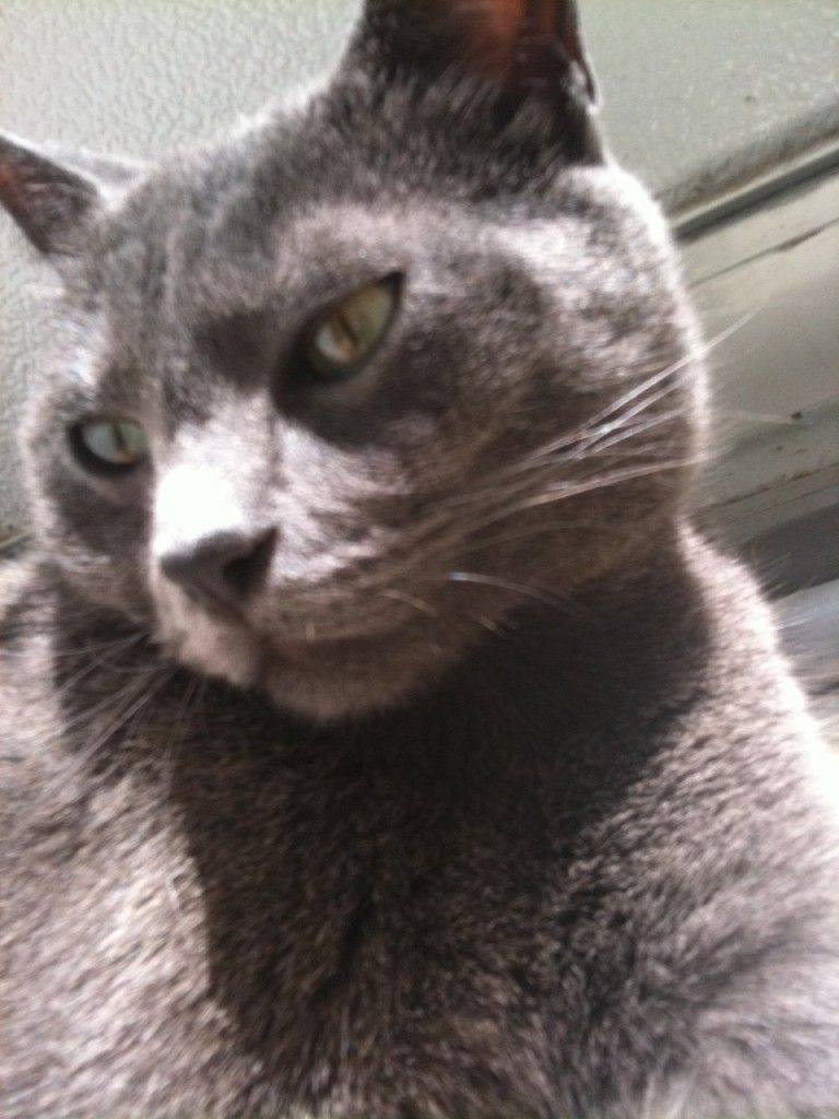 Phil Eyes2 Cat Remedies Cat Care Cat Eye Infection