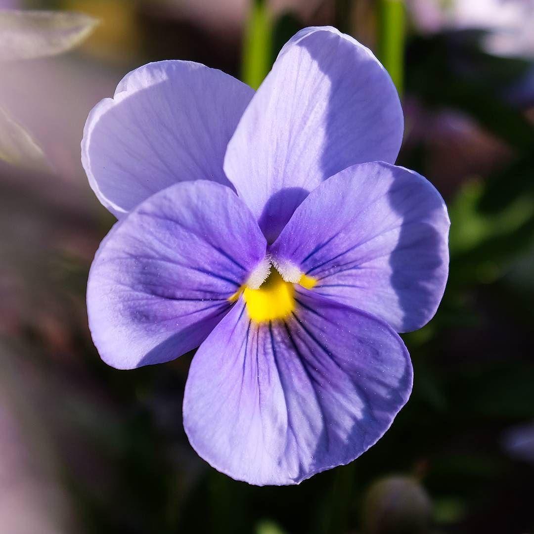#ilkbahar #spring #anıyakala #photooftheday #kadrajturkiye #picofday #picoftheday #objektifimden #efsad #flover #cicek  #mor