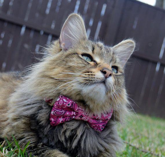 Pink Bandana Cat Bow Tie Cat Collar Cat Bow Tie Kitten Bow Tie