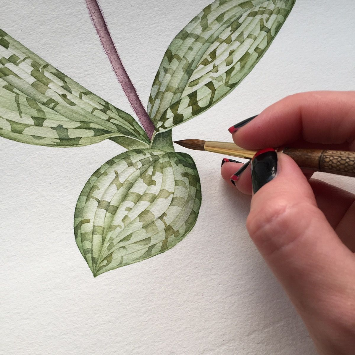 Slipper Orchid Botanical Illustration with watercolor on Behance