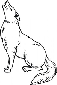 Coyote Coloring Pages Supercoloring Com Animal Drawings Coyote Drawing Drawings